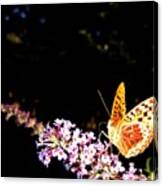 Butterfly Banquet 1 Canvas Print