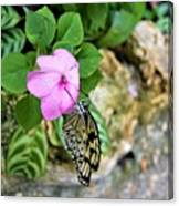 Butterfly Banquet Canvas Print