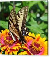 Butterfly Beauty II Canvas Print