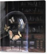 Butterfly Belljar  Canvas Print