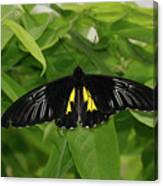 Butterfly Black And Yellow Canvas Print