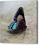 Butterfly Blue On Groovy 2 Canvas Print