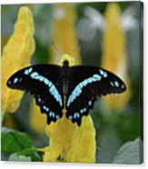 Butterfly Blue Striped Canvas Print