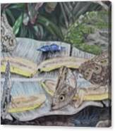 Butterfly Brunch Canvas Print