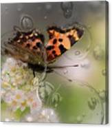 Butterfly Bubbles Canvas Print