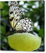 Butterfly Cocktail Time Canvas Print