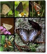 Butterfly Collage 1 Canvas Print