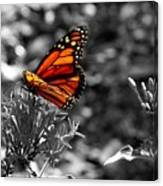 Butterfly Color On Black And White Canvas Print