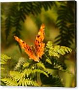 Butterfly Comma Canvas Print