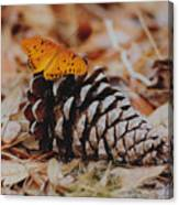 Butterfly Cone Canvas Print