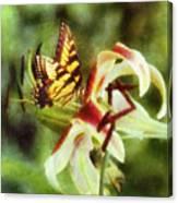 Butterfly Daylily Canvas Print