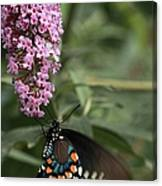 Butterfly Delight Canvas Print