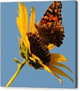 Butterfly Dining Canvas Print