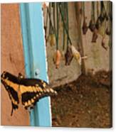 Butterfly Drying His New Wings Canvas Print