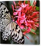 Butterfly Enchantment Canvas Print