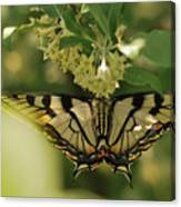 Butterfly From Another Side Canvas Print
