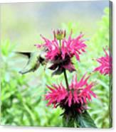 Butterfly Garden 5 Canvas Print