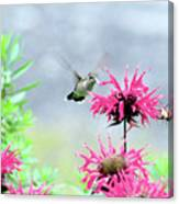 Butterfly Garden 7 Canvas Print