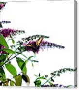 Butterfly Garden II Canvas Print