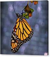 Butterfly Hanging From Leaf Canvas Print
