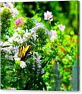 Butterfly In A Garden Canvas Print