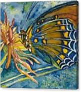 Butterfly In Ca Canvas Print