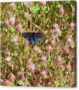 Butterfly In Clover Canvas Print