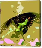 Butterfly In Color Canvas Print
