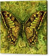 Butterfly In Greens-amber Collection  Canvas Print