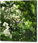 Butterfly In Muted Green Background Canvas Print