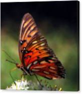 Butterfly In Orton Canvas Print