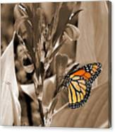 Butterfly In Sepia Canvas Print