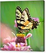 Butterfly In Summer Canvas Print