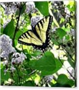 Butterfly In The Lilac No. 1 Canvas Print