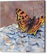 Butterfly-in-the-old-growth-forest Canvas Print