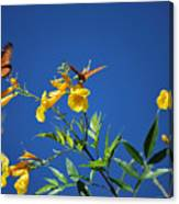 Butterfly In The Sonoran Desert Musuem Canvas Print