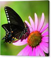 Butterfly In The Sun Canvas Print