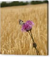 Butterfly In Wheat Field Canvas Print