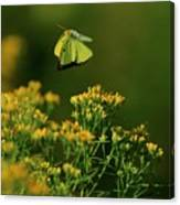 Butterfly-ing Canvas Print