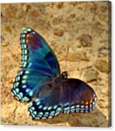 Butterfly Landing Canvas Print