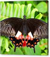 Butterfly Maze Canvas Print