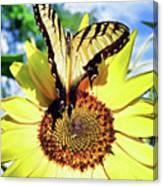 Butterfly Meets Sunflower Canvas Print