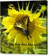 Butterfly Monarch Ba Canvas Print