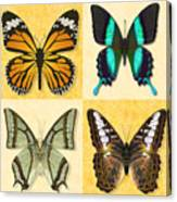 Four Butterfly Montage Canvas Print