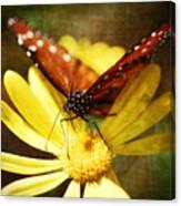 Butterfly On A Daisy  Canvas Print