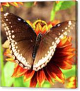 Butterfly On A Sunset Canvas Print