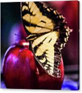 Butterfly On Apple Canvas Print