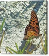 Butterfly On Beach Canvas Print