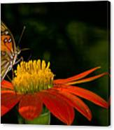 Butterfly On Blossom Canvas Print