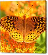 Butterfly On Butterfly Weed Canvas Print